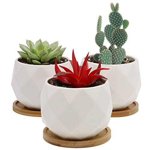 Sqowl 3.2 inch White Ceramic Succulent Planter Pot Modern Cute Small Cactus Herb Flower Planters with Bamboo Tray Indoor or Outdoor Set of 3