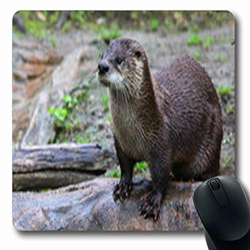Pandarllin Mousepads Scottish Brown Otter Looking Clawed Away Camera Wildlife Nature Predator Oblong Shape 7.9 x 9.5 Inches Oblong Gaming Mouse Pad Non-Slip Rubber Mat