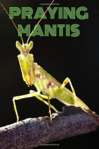 Praying Mantis Notebook With Very Small Animals For Kids