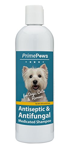 - Prime Paws Chlorhexidine Ketoconazole Antiseptic and Antifungal Medicated Shampoo for Dogs, Cats and Horses - Soap and Paraben Free - 16 oz