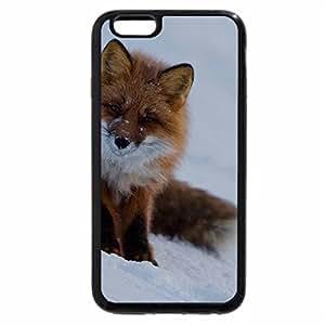 iPhone 6S / iPhone 6 Case (Black) red fox