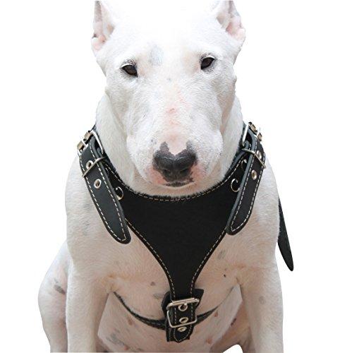 leather pitbull harness - 6