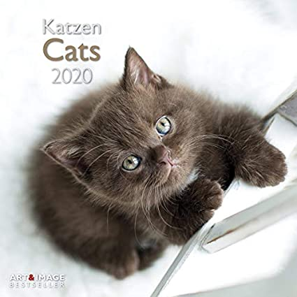 Calendario 2020 gato – 30 x 60 cm con póster (tsh ap) + agenda de bolsillo 2019: Amazon.es: Oficina y papelería