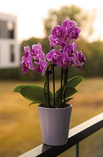 Home Comforts Framed Art for Your Wall Pot Nature Flower Purple Orchid Flower Pot Vivid Imagery 10 x 13 Frame