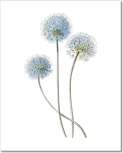 Botanical Prints Wall Art - Vintage Blue Globe Onion Flower Print - 11x14 - Unframed ()