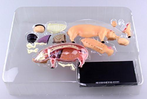 Pig Anatomy Model 4D VISION (japan import): Amazon.es: Juguetes y juegos