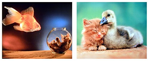 Funny Best Friends Cat  Duck  Goldfish And Cute Cat Kitten In A Fishbowl Kids Room Two Set Wall Decor Picture Art Print  8X10