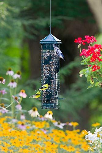 Buy bird feeder