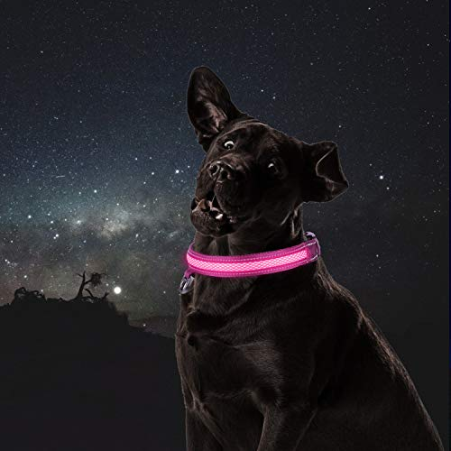 HAEKIM LED Dog Collar, Professional Waterproof & Rainproof Pet Collars, USB Rechargeable with Water Resistant, Glowing 7-Color Lights Reflective Strap