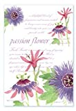 Fresh Scents Scented Sachets - Passion