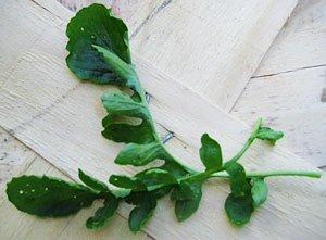 Cress Upland Barbarea verna 10,000 seeds