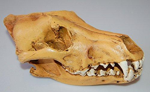 Jili Online Resin Wolf Skull Replica Head Model Figurine Collection Bar Tabletop Decor