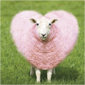 Birthday greeting card funny animal pink heart love sheep goggly 3d birthday greeting card funny animal pink heart love sheep goggly 3d moving eyes m4hsunfo