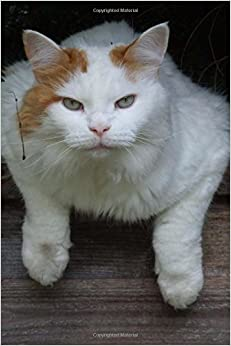 Utorrent Descargar Español Who Are You Looking At? Turkish Van Cat Journal: 150 Page Lined Notebook/diary PDF Gratis