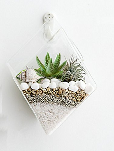 Set of 4 Glass Terrarium Hanging Wall Planters, Diamond Air Plants Succulent Container GeoTerrariums by GeoTerrariums (Image #7)