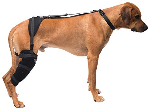 CALDERA Pet Therapy Wrap - Stifle - Large