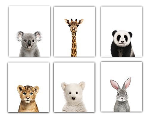Designs by Maria Inc. Baby Nursery Decor Pictures (8x10) | Set of 6 (Unframed) Cute Animal Photography Wall Prints for Baby Boys & Girls Room (Pictures Animal)