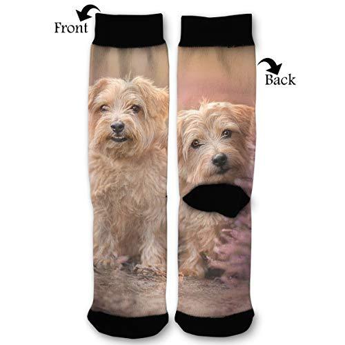 EKUIOP Socks Terrier Bokeh Funny Dog Funny Fashion Novelty Advanced Moisture Wicking Sock for Man -
