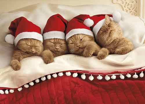 Avanti 10-Count Christmas Cards with Envelopes, Kittens Dreaming of Sugarplums