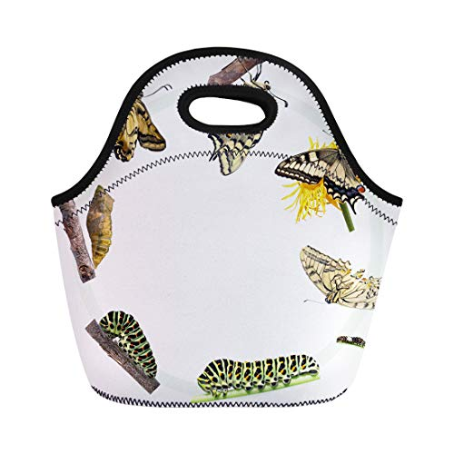 Swallowtail Life Cycle - Semtomn Neoprene Lunch Tote Bag Green Caterpillar Life Cycle of the Swallowtail Butterfly Metamorphosis Reusable Cooler Bags Insulated Thermal Picnic Handbag for Travel,School,Outdoors,Work