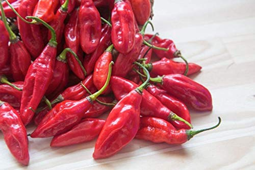 Fruit Extreme (Red Savina Habanero (Capsicum Chinense) Chili Pepper Fruit! 10 Seeds, EXTREME HEAT POWER)