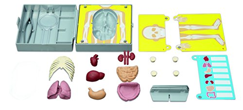 4M Human Torso Science Kit (Organs Human Torso)
