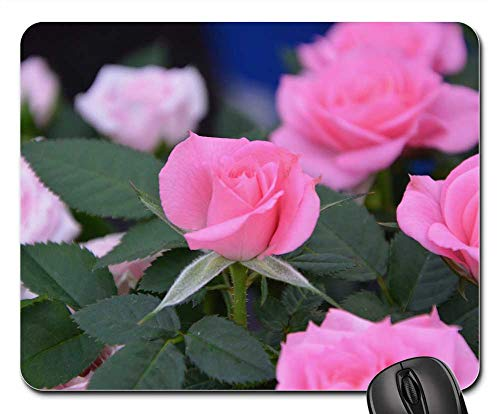 (Mouse Pad - Pink Rosebush Plant Garden Massif)