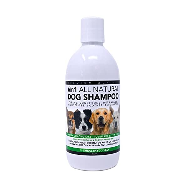 6-in-1-All-Natural-Dog-Shampoo