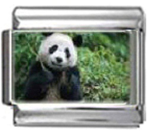 Stylysh Charms Panda Bear Animal Photo Italian 9mm Link AN054