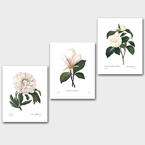 Set of 3 Botanical Prints, White Decor (Redoute Flower Wall Art, Peony Magnolia) Unframed 8x10 inch