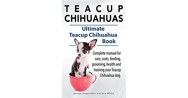 Teacup Chihuahuas  Teacup Chihuahua complete manual for care