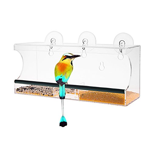 Window feeder Removable Suction Squirrel