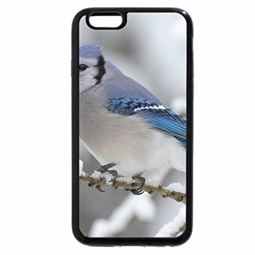 iPhone 6S / iPhone 6 Case (Black) Perching On A Snowy Day