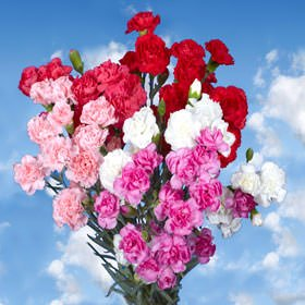 GlobalRose 100 Fresh Cut Valentine's Spray Carnations - Fresh Flowers Express Delivery - Perfect Valentine's Day Gift by GlobalRose (Image #4)