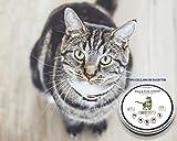 Best Flea Collars For Cats - Pet scape Organic Cat Flea Collar-(2 Collars!) 100% Review