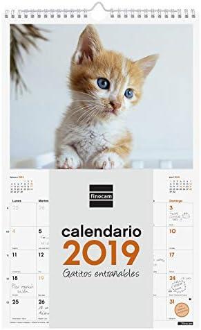 Finocam 780552919 - Calendario de pared 2019: Amazon.es: Oficina y ...
