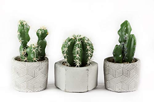 - Linico Fake Cactus Plants in Cement pots, Set of 3. Striking Faux Cactus Plants Potted in Stylish Cement pots. Lifelike Artificial Cactus Plants décor with Modern Twist.