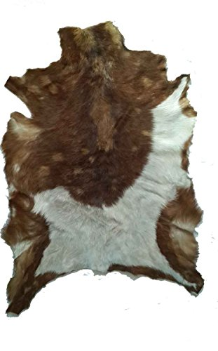 African Hide Rug Leather Hair On Natural Animal Art Egypt Multi Color ()