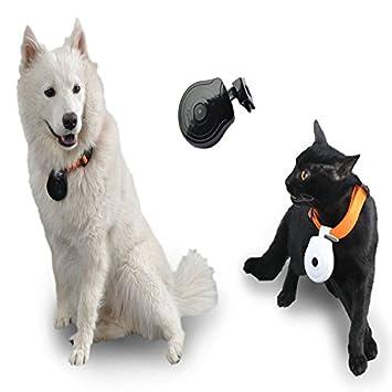 Hanbaili Cámara para mascotas, Perros Puppy Digital Black Pets Collar 480P Cam cámara Video Recorder
