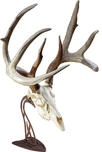 Skull Hooker Table Hooker European Trophy Mount – Perfect Kit for Table Display of Taxidermy Deer Antlers and other Skulls – Robust Brown