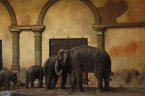 Home Comforts Canvas Print Hagenbeck Hamburg Zoo Elephant Hagen Beck Zoo Vivid Imagery Stretched Canvas 32 x 24