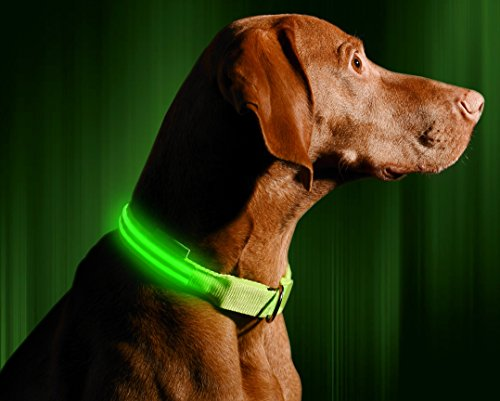 "LED Dog Collar - USB Rechargeable - Available in 6 Colors & 6 Sizes - Makes Your Dog Visible, Safe & Seen - Green, Large (19 – 24"" / 49 – 61cm)"