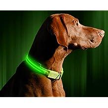 "LED Dog Collar, USB Rechargeable, Medium (16 - 20"" / 41 - 53cm), Neon Green"