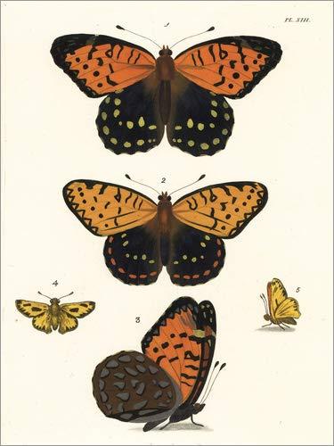 Hartschaumbild 60 x 80 cm: Perlmutterfalter und feuriger Skipper Schmetterling von John Obediah Westwood/Fotofinder.com