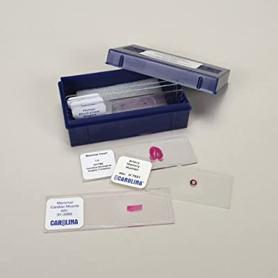 Blood and Lymph Vessels Microscope Slide Set from Carolina Biological Supply Company
