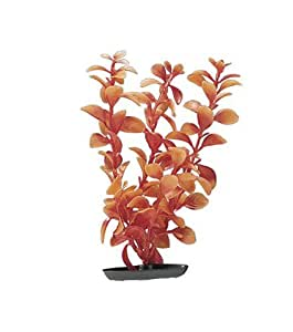 Marina Vibrascaper Red Ludwigia Large Plant, 12-Inch