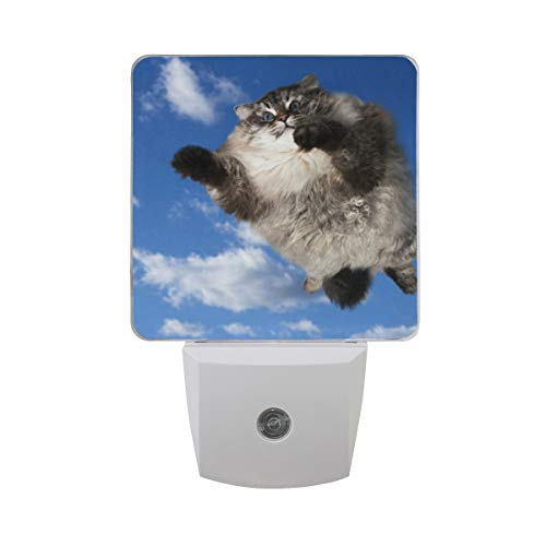 Night Light Flying Fat Cat Led Light Lamp for Hallway, Kitchen, Bathroom, Bedroom, Stairs, DaylightWhite, Bedroom, Compact