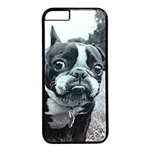 Boston Terrier Look at You Designed iPhone 6 (4.7 inch) Plastic PC Black Hard Back Case