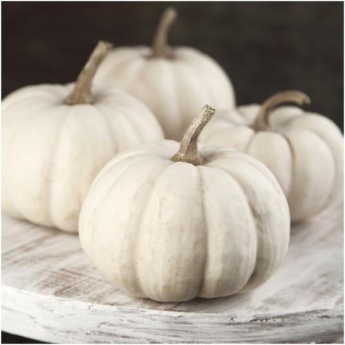 Baby Boo Pumpkin - Package of 50 Seeds, Baby Boo Pumpkin Seeds (Cucurbita pepo)