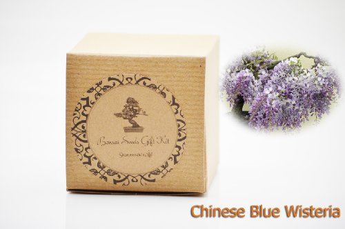 Set of 2 Chinese Blue Wisteria Bonsai Seed Kit- Gift - Complete Kit by 9GreenBox.com (Image #1)